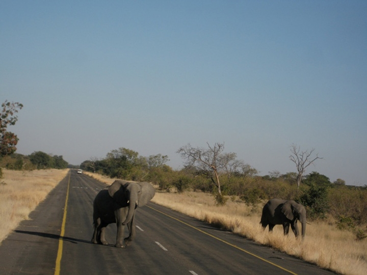 Elephant crossing in Chobe National Park, Botswana