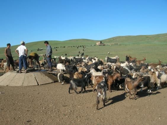 Livestock well.