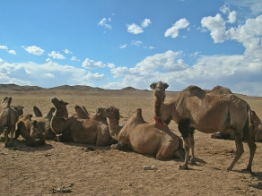 """The camels were laying on their bellies with all four knees buried in the sand."" - Sand Dunes"
