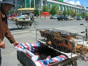 Live fish and chickens for sale - Tibet