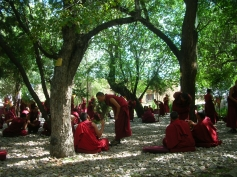 Drepung Monastery Monks - Tibet