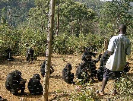 Tacugama Chimpanzee, Freetown, Sierra Leone