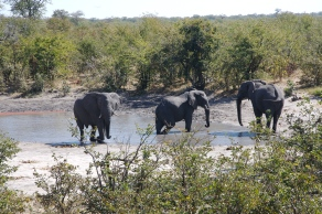 Chobe National Park, elephant enjoying the water hole, BOtswana