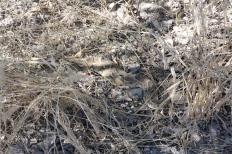 deadly venomous, Botswana