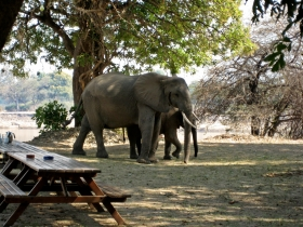 flatdogs campsite, elephant