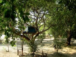 flatdogs campsite,