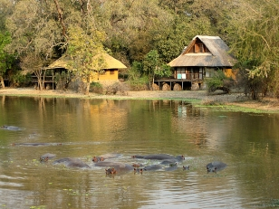 South Luangwa NP, hippos