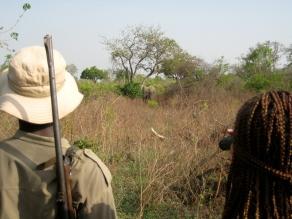 Mole National Park, Ghana