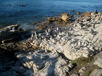 Stony Point penguin colony,