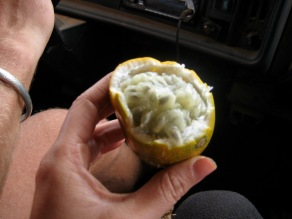 passion fruit, Burundi