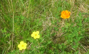 Tiny flowers, like the offspring of the sun painted over the shallow hills, displayed brilliant oranges, yellows, and reds across endless stretches of endless fields.