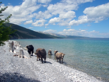 "Ignoring our squabbling, Baagii told us more about the beautiful lake. ""This lake holds seventy percent of Mongolia's fresh water."