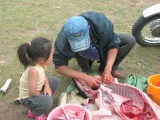 The youngest girl, who was about six years old and too young for other chores, took an interest in the gutting. She squatted next to her father, her head nearly inside the hollow belly of the sheep which was now split open from neck to groin.