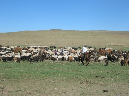 "Baagii then told us a long-held Mongolian saying: ""The more livestock, the better your lifestyle will be."""