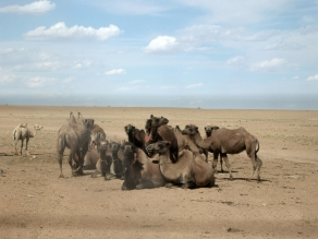 About 200m (656ft) away, a dozen or so camels roamed freely. Wild herds were a common sight, but these were the only living creatures we'd seen all day.