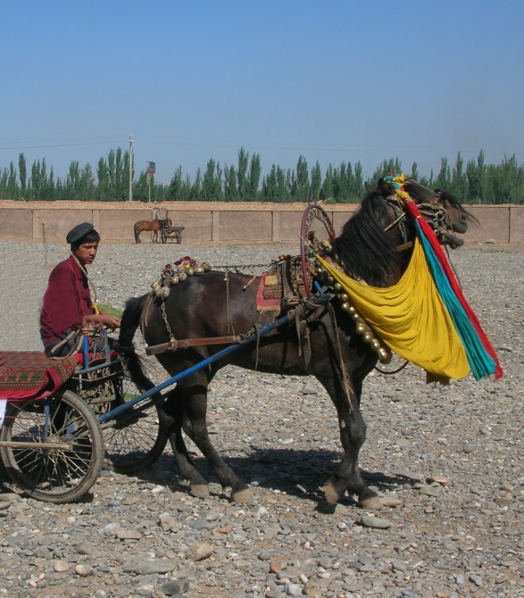 Animal market day in Kashgar, China