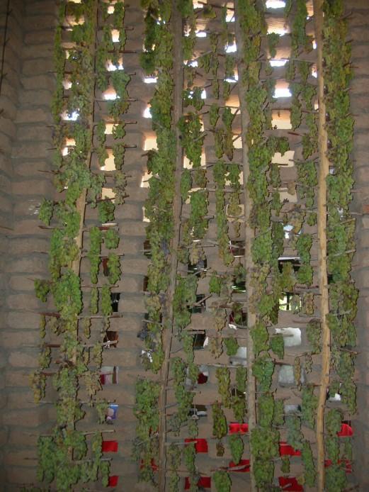Drying grapes, Western China