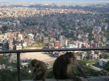 monkeys overlooking Kathmandu, Nepal. Backpacks and Bra Straps