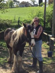 Villesiscle, France, - pony