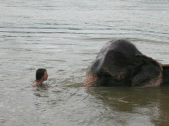Maggie-the-Mom, swim with elephant, India