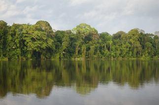 Amazon rive,r Peru