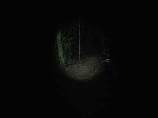 night walk Refugio lodge, Peru
