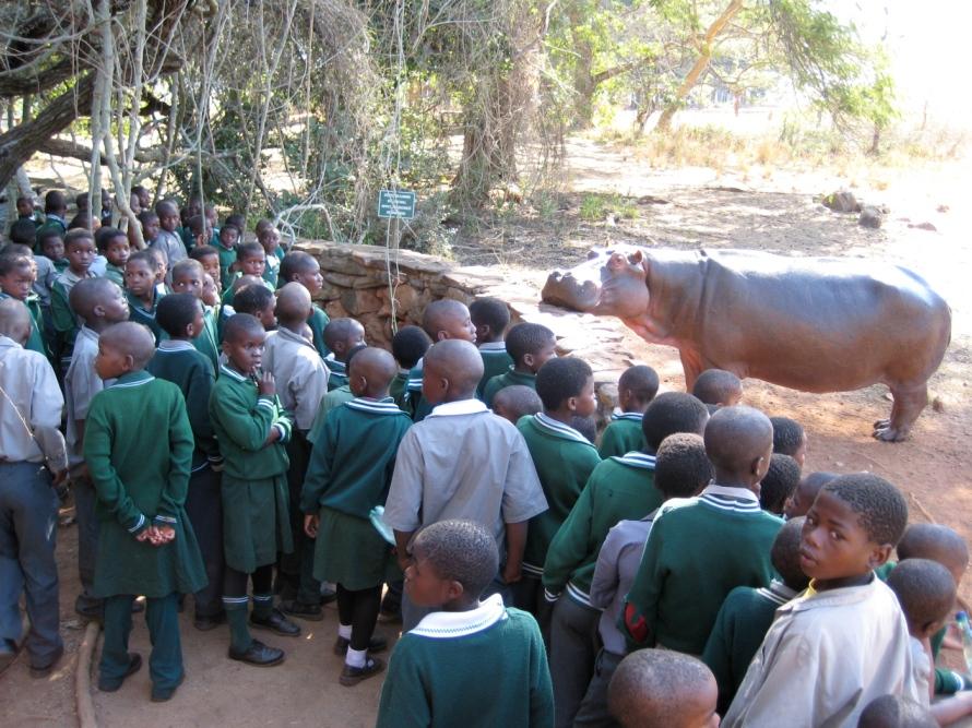 Swaziland Hippo