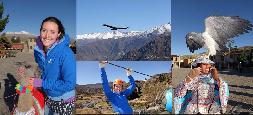 Colca Canyon - Witnessing the flight of the giant condors, holding hawks, petting alpacas and lamas, eating guinea pig, ziplining and reaching 4,910m.
