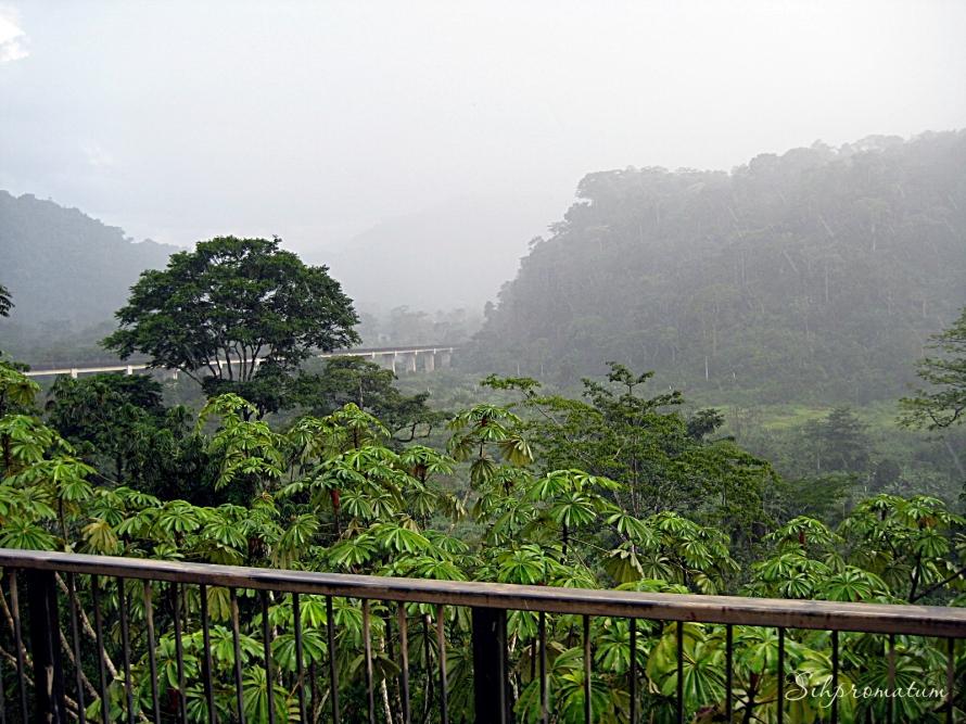 Cameroon. bridge
