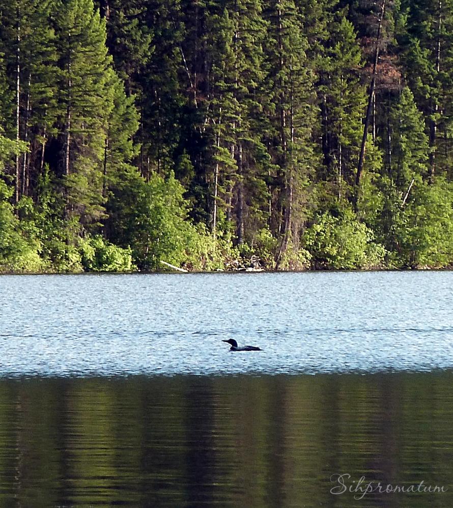 Loon Lake BC