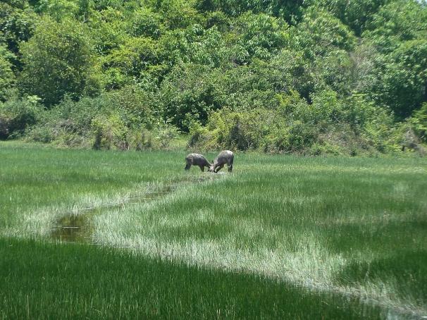 lush and green Cambodia