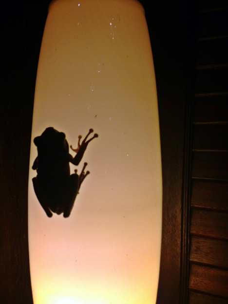 A cute little frog on the lamp