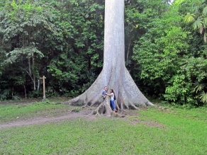Such huge trees in the Tikal National Park