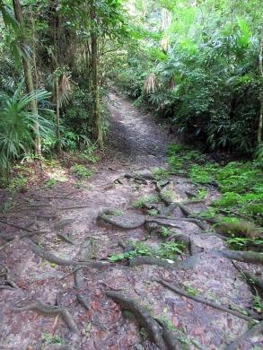 Tikal National Park