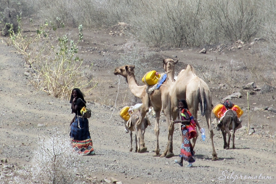 this is the way of life in the Danakil Depression