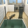 Pieterburen Seal rehab