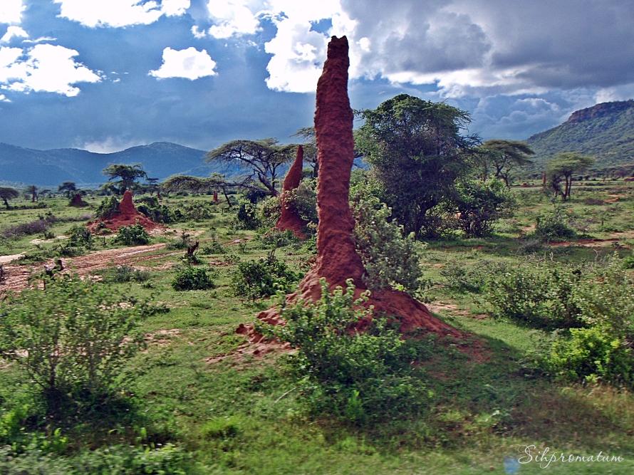 Huge termite hill