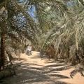 A bike ride around Siwa.