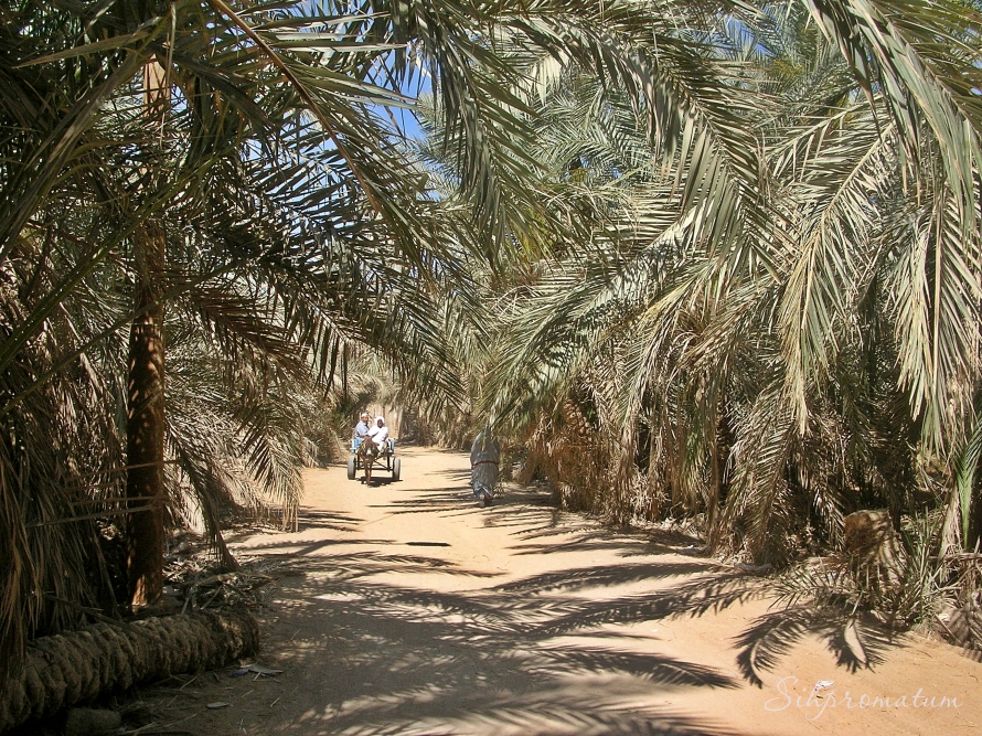 A bike ride around Siwa.
