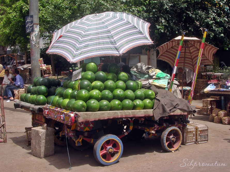 Keeping the melons cool in Alexandra
