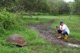 Galápagos Island tortoise
