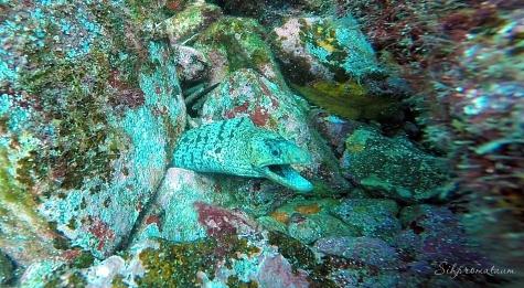 Galápagos Island eel