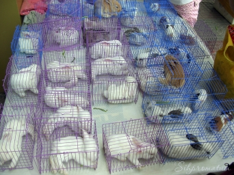 Bunnies for sale perhaps for dinner :(