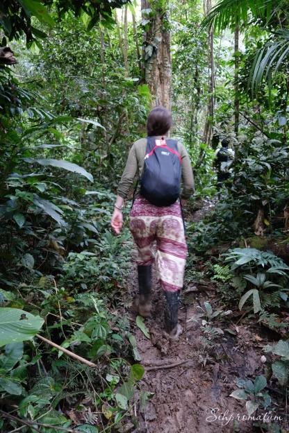 Amazon jungles