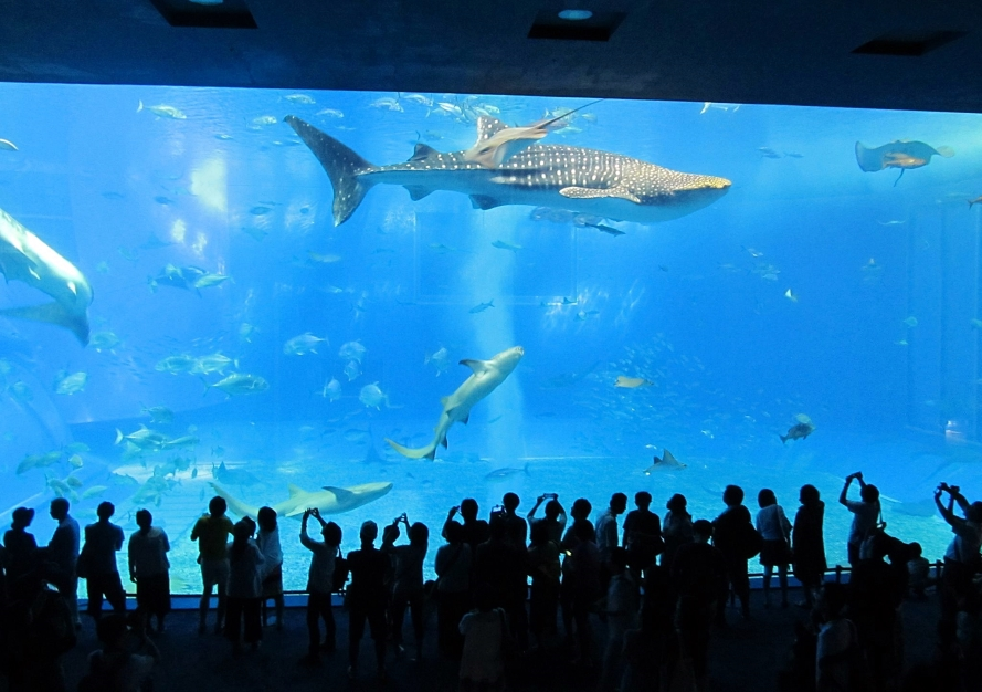 okinawa aquarium.  Japan