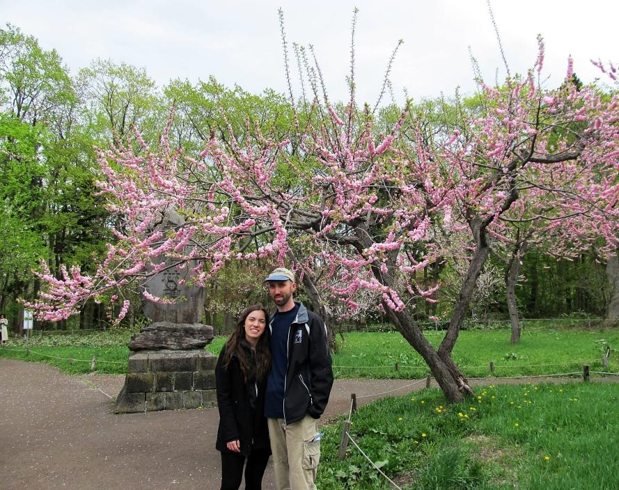 Cherry blossoms in Hokkaido. Japan