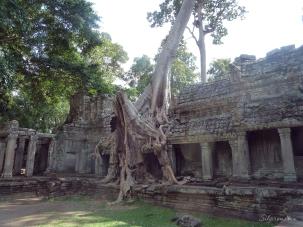 cambodia 054 (3)