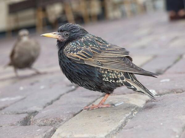 Netherlands Bird
