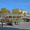 Tpbacco leaves in Macedonia
